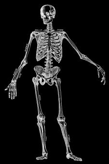 Free Stock Photo of Human Skeleton, Circa 1911