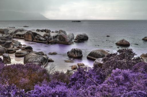 Free Stock Photo of Boulders Lavender Beach - HDR