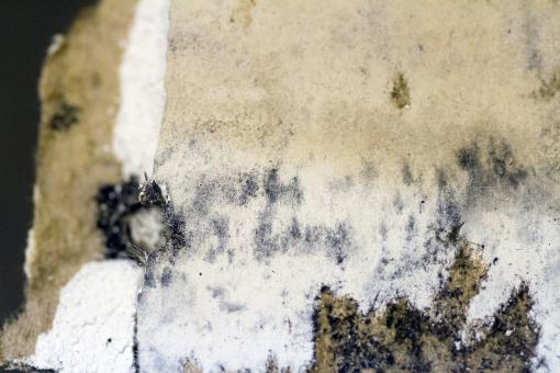 Free Stock Photo of Mold