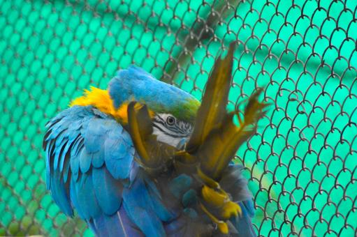 Free Stock Photo of Blue Gold Macaw