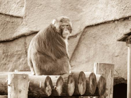 Free Stock Photo of Russian Monkey