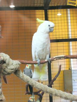 Free Stock Photo of White Parrot