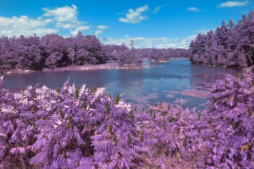 Free Stock Photo of Thousand Islands Scenery - Lavender