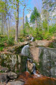 Free Stock Photo of Trickling Forest Stream - HDR