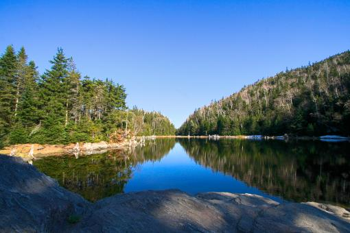 Free Stock Photo of Lac Spruce - HDR