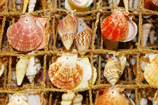 Free Stock Photo of Seashells