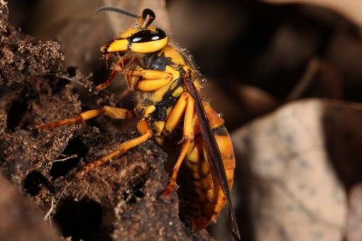 Free Stock Photo of Yellow Jacket