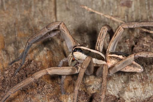 Free Stock Photo of Wolf Spider