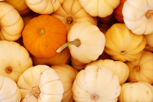 Free Stock Photo of Background of Pumpkins