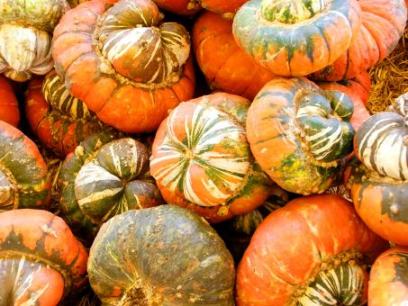 Free Stock Photo of Pumpkins