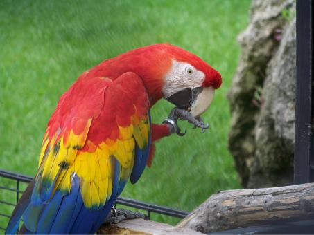 Free Stock Photo of Parrot
