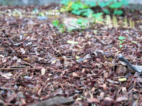 Free Stock Photo of Forest Floor