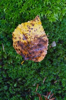 Free Stock Photo of Autumn leaf