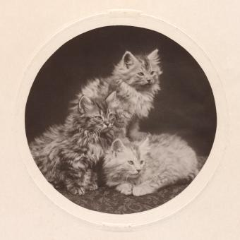 Free Stock Photo of Cute Antique Kittens - Circa 1908