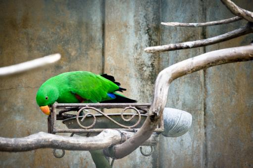 Free Stock Photo of Green Parrot