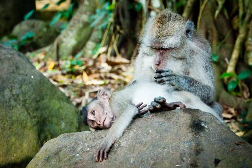 Free Stock Photo of Monkey mother and baby