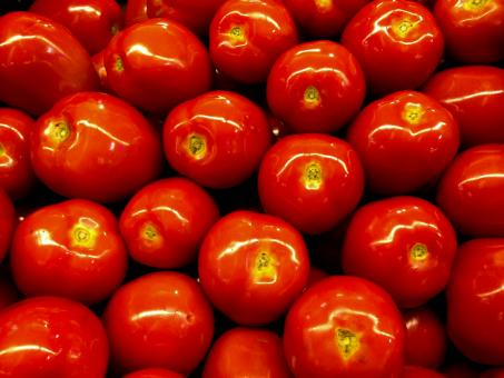 Free Stock Photo of Healthy Tomatoes