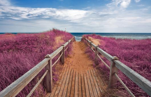 Free Stock Photo of Pink Beach Boardwalk
