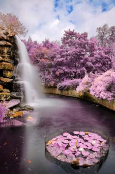 Free Stock Photo of Zoo Waterfall - Ultra Violet HDR
