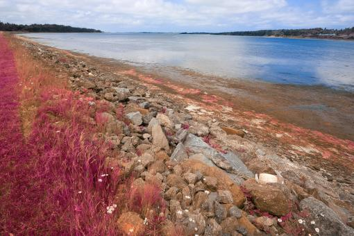 Free Stock Photo of PEI Coastal Scenery - Pastel Pink HDR
