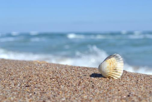 Free Stock Photo of Shell by the beach