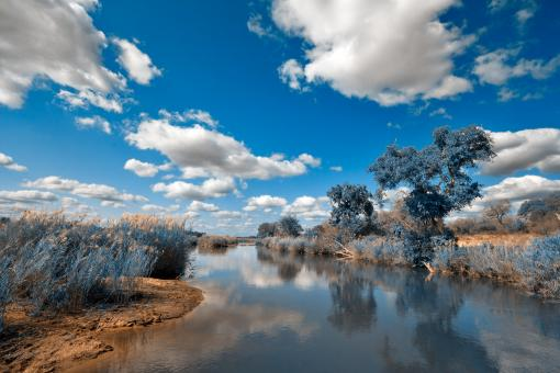 Free Stock Photo of Kruger Park Landscape - Winter Blue