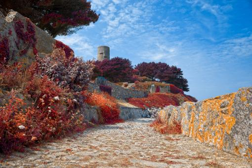 Free Stock Photo of Guernsey Scenery - Autumn Warm HDR