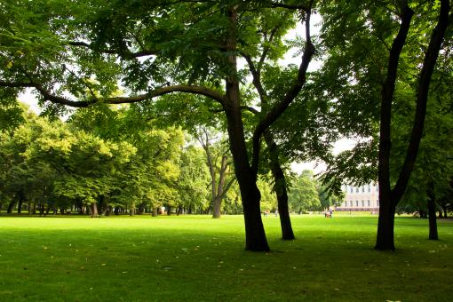 Free Stock Photo of Green lawn in the park