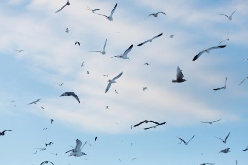 Free Stock Photo of Gulls