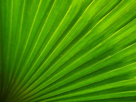 Free Stock Photo of Abstract Green Palm Leaf Background