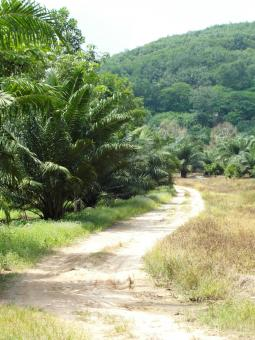 Free Stock Photo of Tropical Dirt Road
