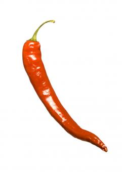 Free Stock Photo of Red hot chilli pepper