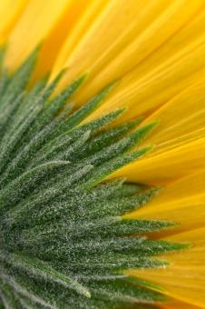 Free Stock Photo of Yellow Daisy Macro - HDR