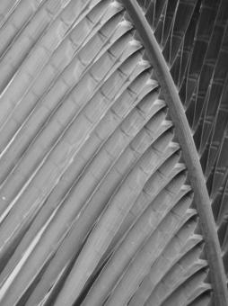 Free Stock Photo of Abstract Palm Leaf Black and White