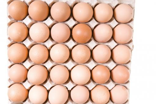 Free Stock Photo of Eggs