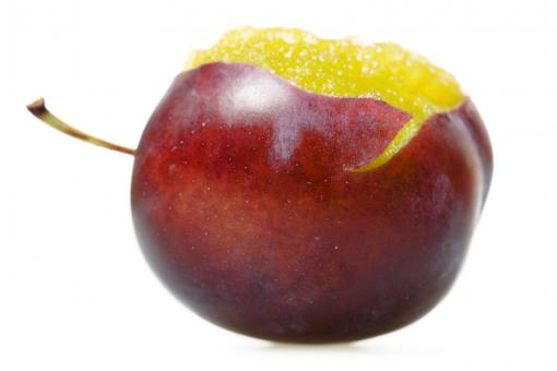Free Stock Photo of Fresh Plum