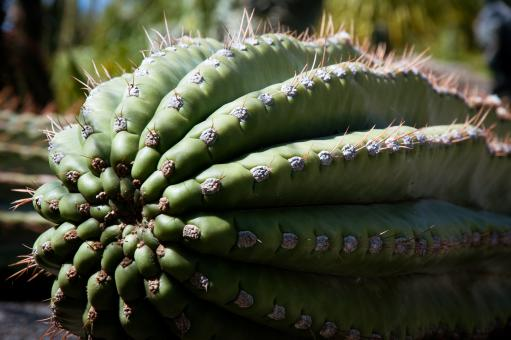 Free Stock Photo of Cactus Plant