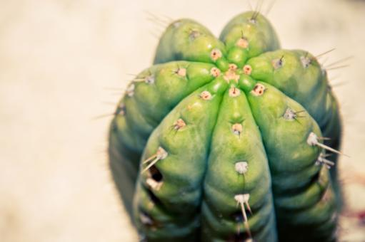 Free Stock Photo of Close up of cactus plant