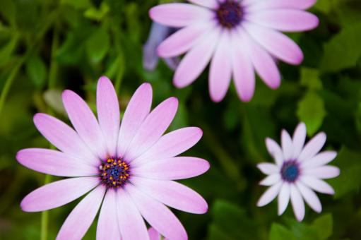 Free Stock Photo of Purple flowers