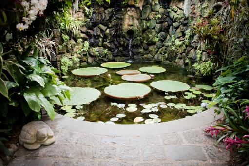 Free Stock Photo of Pond with waterlillies
