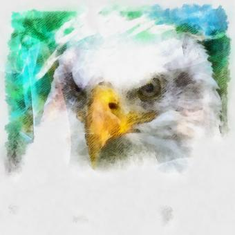 Free Stock Photo of Bald Eagle