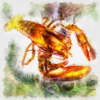 Free Stock Photo of Lobster Illustration