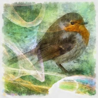 Free Stock Photo of Robin Illustration