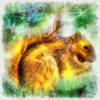 Free Stock Photo of Squirrel Illustration