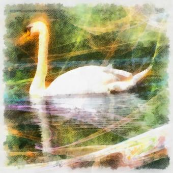 Free Stock Photo of Swan Illustration
