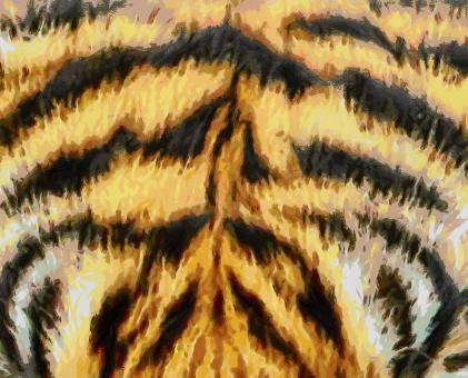 Free Stock Photo of Tiger Fur Painting