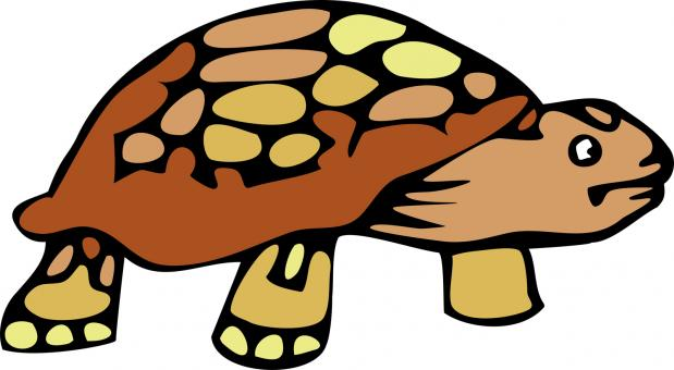 Free Stock Photo of Tortoise Clipart