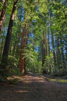 Free Stock Photo of Muir Woods Trail - HDR