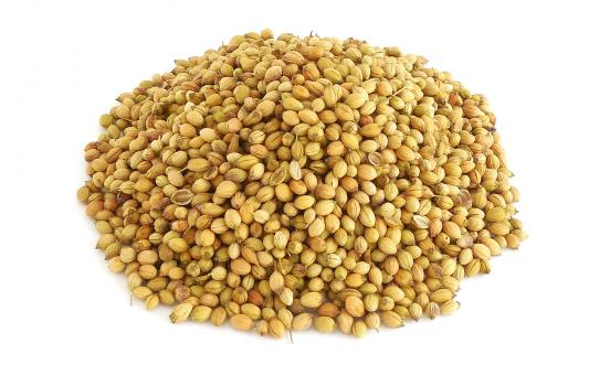 Free Stock Photo of Coriander Seeds