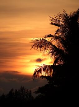 Free Stock Photo of Tropical Palm Tree Sunset
